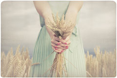 Woman holding some corn spikes Stock Photo