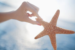 Woman holding starfish at the beach Stock Photography