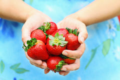 Woman Holding Strawberries Royalty Free Stock Image