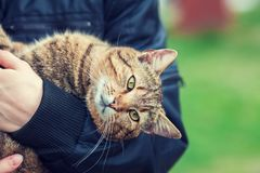 Woman holding a stray cat. Outdoor in the garden Stock Photos