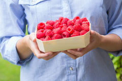 Woman Holding Tray Of Fresh Raspberries Royalty Free Stock Image