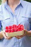 Woman Holding Tray Of Fresh Raspberries royalty free stock photography