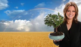 Woman Holding Tree - Clean Environment Concept. Beautiful woman holding Bonsai tree over beautiful wheat landscape Royalty Free Stock Images