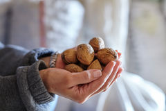 Woman holding walnuts Royalty Free Stock Photos