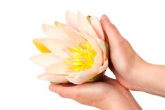 Woman holding waterlily Royalty Free Stock Images