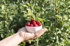 Free Woman Holding White Bowl Full Of Fresh Tasty Raspberries Against Green Garden Stock Photo - 154885920
