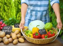 Woman holding wicker basket with fresh vegetables. At farmer`s market Stock Photo