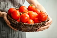 Woman holding wicker bowl with ripe tomatoes. Closeup Royalty Free Stock Images
