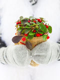Woman holding winter plant in her hands Stock Photography