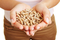 Woman holding wood pellets in hand Stock Photography