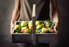 Woman holding wooden basket with ripe pears. On grey background Stock Image