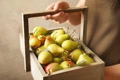Woman holding wooden basket with ripe pears. On light background Stock Photos
