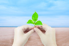 Woman is holding young plant sprout isolated on sea and sand at nature landscape background. Corporate social and environment responsibility concept Royalty Free Stock Image