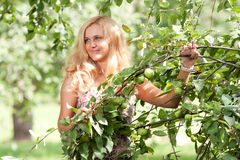 The woman holds an apple-tree branch Royalty Free Stock Image