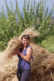 Woman holds armful of wheat Royalty Free Stock Photo