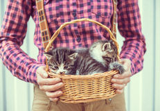 Woman holds basket with kittens Stock Photography