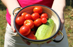 Woman holds bowl with tomatoes and cucumber. Photo of woman holding bowl with tomatoes and cucumber royalty free stock photos