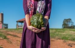 Woman Holds Bumpy Green Heirloom Pumpkin. On Farm Royalty Free Stock Photography