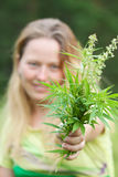 Woman holds  cannabis Stock Photography