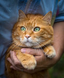 Woman holds a cat. Woman holds a red cat. Selective focus stock photo