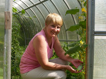 The woman holds a cucumber in the greenhouse Royalty Free Stock Image