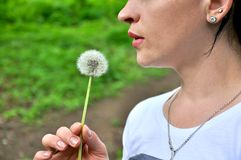 Dandelion in the hand of a woman royalty free stock image