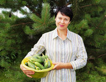 Woman holds fresh cucumbers Royalty Free Stock Photography