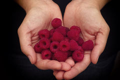 Woman holds fresh raspberries in her palms Stock Photo