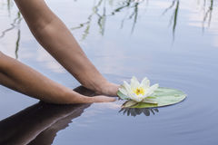 Woman holds in hands beautiful water lily in a lake in the woods Royalty Free Stock Photography