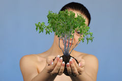 The woman holds in hands soil with a tree Stock Photos