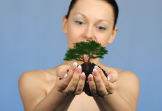 The woman holds in hands soil with a tree Stock Images