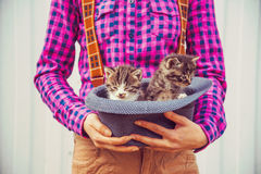 Woman holds hat with kittens Royalty Free Stock Image