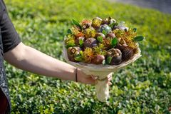 Woman holds in her hand a bouquet of exotic fruits on the background of a green shrub stock photo