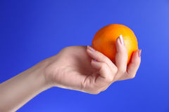 Woman holds in her hand oranges. Woman holds in her left hand oranges on blue background Royalty Free Stock Image