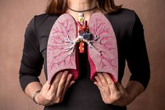 Woman holds Medical Model of Human Lungs. An adult woman holds against her chest a medical model of the human lungs stock photo