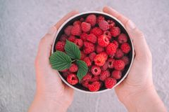 Woman Holds Organic Raspberry In Her Hands. Close up Royalty Free Stock Image
