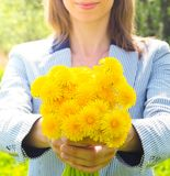 A woman holds out a yellow bouquet of wild flowers. Lady with a bouquet of dandelions. Blurred background. royalty free stock photography