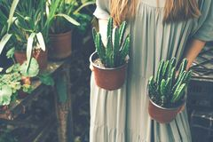 Woman holds 2 pots of succulents  in greenhouse royalty free stock image