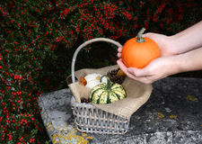 Woman holds pumpkin in two hands above basket of gourds Stock Photography