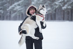 Woman holds Siberian Husky on her arms. Stock Image