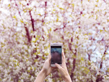 Woman holds a smartphone and makes photos. Telephone over blossoming spring tree background, soft focus, close up Royalty Free Stock Photography