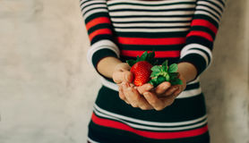 Woman holds strawberries in her hands Royalty Free Stock Images