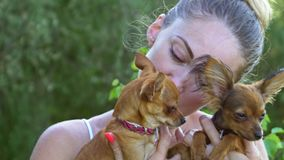 Woman holds two dogs in her hands. The toy terrier fluttering hair in the wind. They are very differently looking around stock video