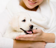 Woman holds white puppy on her hands Royalty Free Stock Photos