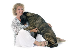 Woman and Holland Shepherd. Portrait of an holland shepherd with his owner in a studio Royalty Free Stock Photos