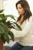 Woman At Home Looking After Houseplant. Hispanic Woman At Home Looking After Houseplant royalty free stock photography