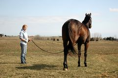 Woman with Horse. Pretty young woman holding her horse as he stands in a field drying off after a bath Stock Photo