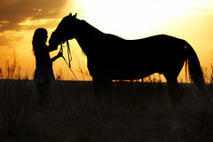 Woman and horse. Silhouette of the woman and horse training during sunset Royalty Free Stock Image