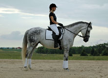 Woman and Horse. Woman riding grey horse in dressage arena stock photo