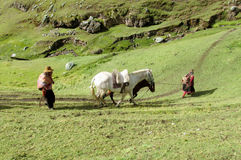 Woman with a horse in the countryside in Peru Stock Photo
